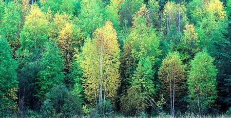 как выбрать породу дерева для термообработки