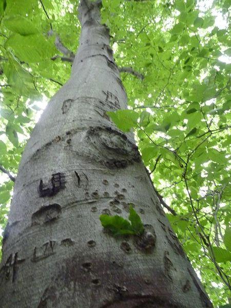 термобук из термодифицированной древесины_3