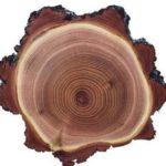 акация , плотность древесины и твердость