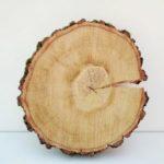 береза карельская , плотность древесины и твердость