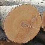 бук , плотность древесины и твердость