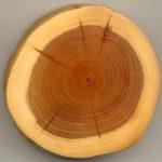 каштан , плотность древесины и твердость