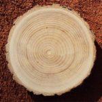 ясень , плотность древесины и твердость